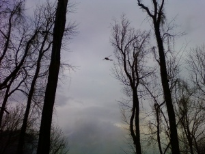 Chopper flying over my house to bring water from Town Lake above my house to Melrose Mountain
